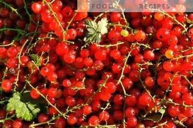 Hur man förvarar röda vinbär