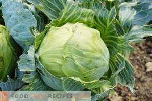 How to freeze white cabbage