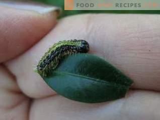Lepidocid är ett effektivt läkemedel mot löda skadedjur